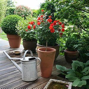 geholze im kubel fur balkon und terrasse sonne With französischer balkon mit bäume und sträucher für den garten