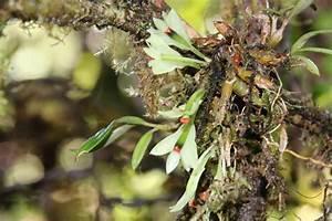 Was Fressen Kellerasseln : roland 39 s orchideen blog hier bloggt roland schettler ~ Lizthompson.info Haus und Dekorationen