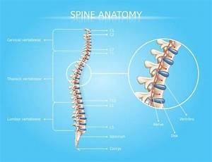 Lower Back Pain Anatomy