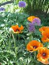Purple and orange | Nature Scapes and Miracles | Pinterest purple and orange flower garden