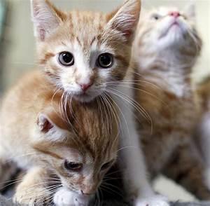 Malzpaste Für Katzen : weltkatzentag die besten tipps f r die zufriedene katzen welt ~ Orissabook.com Haus und Dekorationen