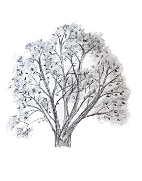 drawn fir tree  drawing pencil   color drawn