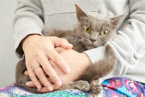 grumpy cat   stuck   japanese shelter