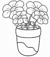 Coloring Margarita Printable Getcolorings Flower sketch template