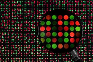 Dna Microarray What A Genome Wide Screening Can Reveal About Cancer