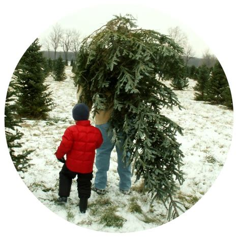 chester county pa christmas tree farms 2016 tree farms west chester pa