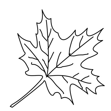 coloring pages trees  leaves  downloads