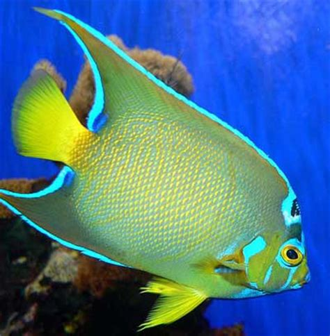saltwater fish species