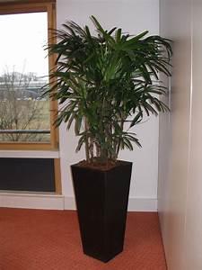 Plante D Intérieur Haute : plante haute d int rieur florideeo ~ Premium-room.com Idées de Décoration