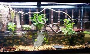 54 best Other -ariums (vivariums, paludariums, ripariums ...