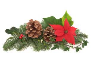 flowers for christmas decorations home lilys design ideas