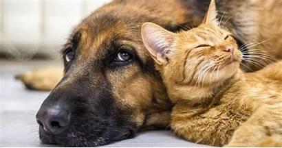 Pets Pet Keep Christmas Healthy Talk Story