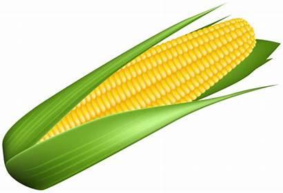 Corn Transparent Clipart Vegetables Yopriceville