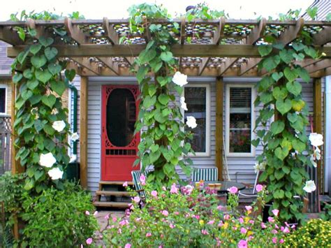 fast growing vines for pergola the best vines for pergolas and arbors