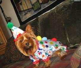 Clown Dog Halloween Costume
