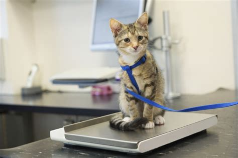 when to take kitten to vet 8 signs your cat needs to see a veterinarian adventure cats