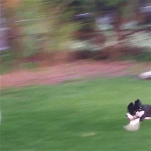 Dog Funny Fail GIFs - Find & Share on GIPHY