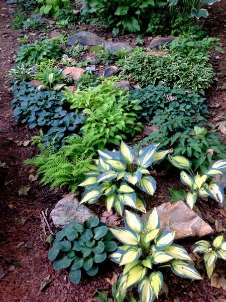 hosta shade garden shade gardening for your front rocks and hostas home garden pinterest gardens