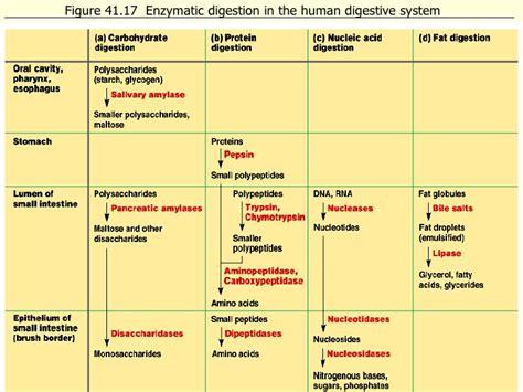 Ib Biology Digestion Web Designing Flowchart On Canva Chemistry Stoichiometry Flow Chart For Cara Membuat Dengan C++ Creation Word Generator Cobol Code Factorial Of Pseudocode