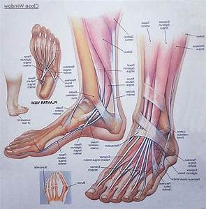 1000  Ideas About Foot Anatomy On Pinterest