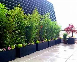 bambus pflanzen schwarze kubeln reihe terrasse balkon With französischer balkon mit bambus pflanzen garten