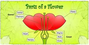 Science  U2013 Life Cycle Of A Plant And The Different Parts Of A Flower