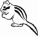 Chipmunk Coloring Pages Clipart Printable Animals Animal Gerbil Supercoloring Chipmunks Clip Drawing Nut Cliparts sketch template