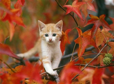 Pretty Animal Wallpaper - pretty fall backgrounds wallpaper cave