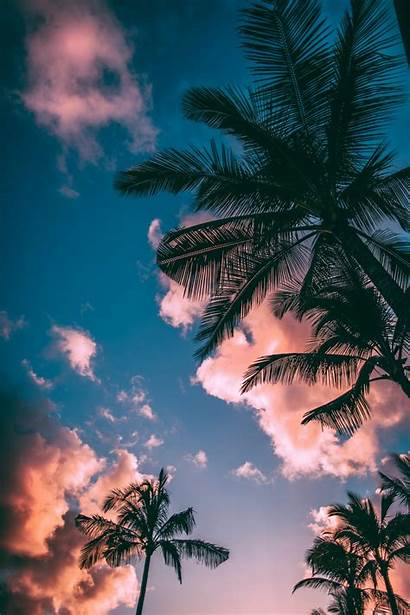 Summer Wallpapers Unsplash Palm Trees Nature 1000