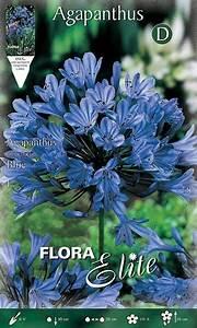Graines D Agapanthe : agapanthe bleue la pi ce graines elem ~ Melissatoandfro.com Idées de Décoration