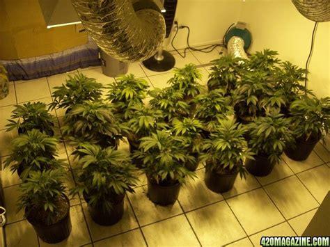 grow ls for indoor plants 2000 watt 20 plant indoor my grow advice