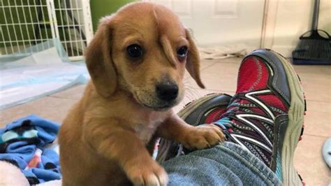 meet narwhal  rescue puppy   tail growing