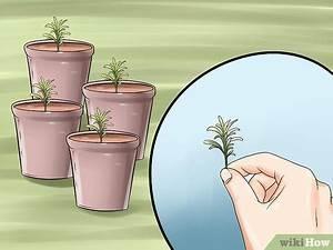 Plant De Lavande : 4 mani res de multiplier des plants de lavande ~ Nature-et-papiers.com Idées de Décoration