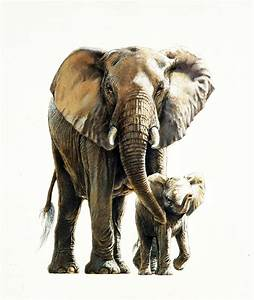 Johan Hoekstra Wildlife Art Collection | The Very Best of ...