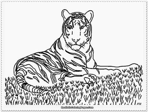 realistic animal coloring pages realistic animals coloring pages only coloring pages