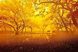 Golden Morning Nature Wallpaper Wallpapers