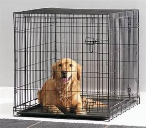 Video Pour Chien : cage transport pliante pour chien enclos pour chiot ~ Medecine-chirurgie-esthetiques.com Avis de Voitures