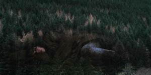 Under The Skin (Jonathan Glazer) – The Human Landscape ...