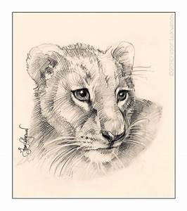 Drawings Of Lion Cubs