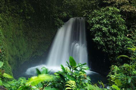fotos gratis naturaleza cascada verde selva botanica