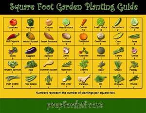 Square Foot Garden Planting Guide Preparing For Shtf