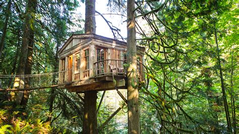 The Most Luxurious Tree Houses Around The World To Stay In