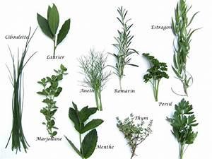 Plantes à Suspendre : le guide des plantes aromatiques aneth ang lique ~ Premium-room.com Idées de Décoration