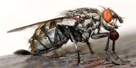 Insekten Im Haus Erkennen by Ungeziefer Im Haus Bestimmen Finest Haus Insekten