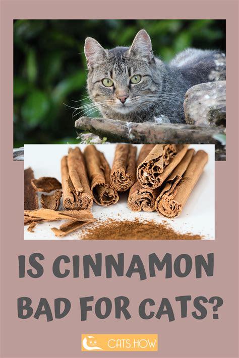 can cats eat cinnamon applesauce