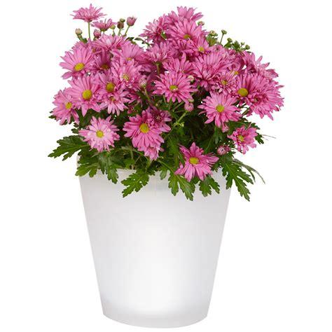 pot 224 fleurs 224 233 nergie solaire grand pots 224 fleurs jardini 232 res canac