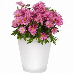 Pot De Fleurs Gifi : fleurs jardinieres choisir accueil design et mobilier ~ Dailycaller-alerts.com Idées de Décoration