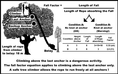 the theory of the fall factor and two different tree