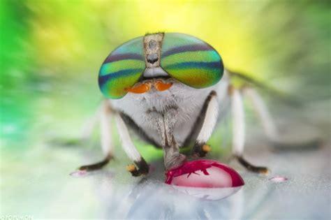 hasil foto makro menakjubkan hewan unik  inspirasi