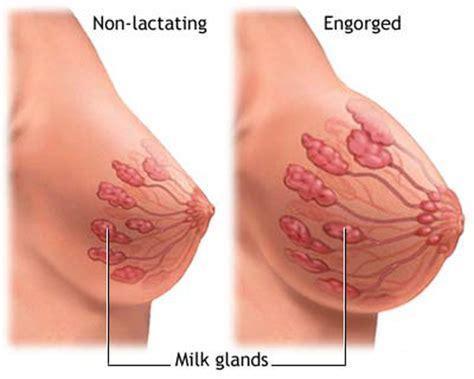 Wanita Hamil 9 Minggu Top 15 Early Symptoms Of Pregnancy Indusladies Com